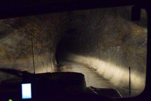 glow worm tunnel